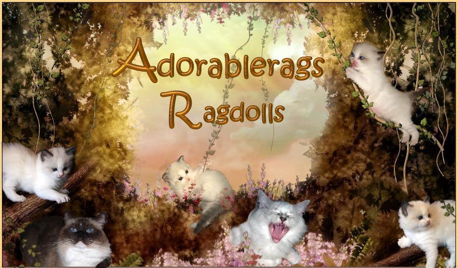 Adorablerags Ragdoll Cattery